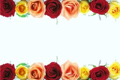 Floral rose border Royalty Free Stock Photography