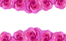 Floral rose border Royalty Free Stock Images