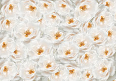 Floral rose flower backdrop Royalty Free Stock Photos
