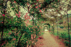 Floral rose garden with path. Royalty Free Stock Image