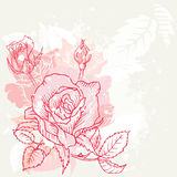 Floral Roses Background Royalty Free Stock Photo