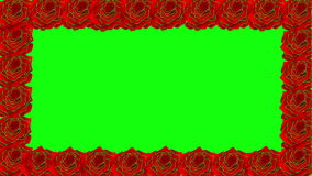 Floral roses decoration on green screen stock video