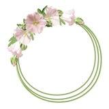 Floral round frame Stock Photos