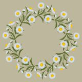 Decorative wreath of daisy flowers with leaves on a beige background. Floral round frame from summer flowers. Decorative wreath of daisy flowers with leaves on a Royalty Free Stock Images