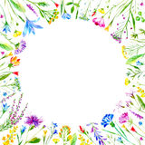 Floral round frame of a wild flowers and herbs on a white background. Buttercup,cornflower,clover,bluebell,forget-me-not,vetch,timothy grass,lobelia,snowdrop Stock Photos