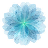 Floral round pattern of the flower petals. Floral round pattern of blue flower petals Stock Images