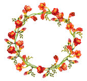 Floral round ring wreath with red freesias flowers and buds Stock Photography