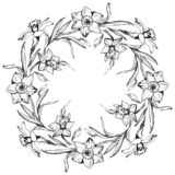 Floral round wreath with hand drawn flowers daffodils, narcissus royalty free stock images