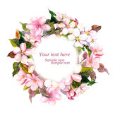 Floral round wreath with pink flowers - apple, cherry blossom for postcard. Watercolor. Floral round wreath with pink flowers - apple, cherry blossom for elegant Royalty Free Stock Photos