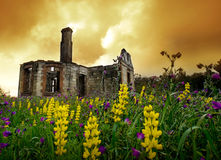 Floral Ruins Stock Photo