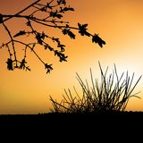 Floral scenery 03. Highly detailed plant silhouette & coloured sky scenery Stock Photo