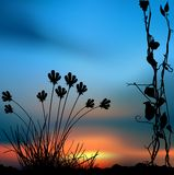Floral scenery 04. Highly detailed plant silhouette & coloured sky scenery Royalty Free Stock Images
