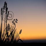 Floral scenery 05. Highly detailed plant silhouette & coloured sky scenery Royalty Free Stock Photography