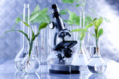 Floral science. Floral experiments in laboratory. all arranged in studio Royalty Free Stock Images