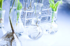 Floral science in blue laboratory Royalty Free Stock Photography