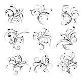 Floral Scroll. Illustration of floral scrolls and design elements Royalty Free Stock Images