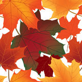 Floral seamless autumn background Stock Photos