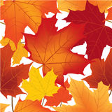Floral seamless autumn background Royalty Free Stock Images