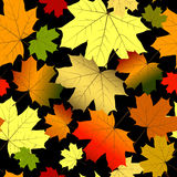 Floral seamless autumn pattern. Floral seamless pattern of colorful maple leaves Stock Photography