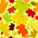 Floral seamless autumn pattern. Floral seamless pattern with  maple leaves Royalty Free Stock Image