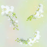 Floral seamless background Stock Photo