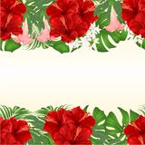 Floral seamless background bouquet with tropical flowers floral arrangement, with red hibiscus, palm,philodendron and Brugmansia royalty free illustration