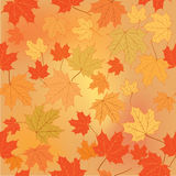 Floral seamless background. Fall wallpaper. Royalty Free Stock Images