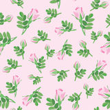 Floral seamless background. flower rose pattern. Royalty Free Stock Images