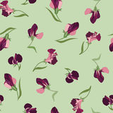Floral seamless background from  flowers Stock Image