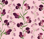 Floral seamless background. gentle flower pattern. Royalty Free Stock Image