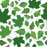 Floral seamless background. Nature green leaf  texture. Royalty Free Stock Photography