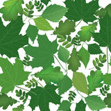 Floral seamless background. Nature green leaf  texture. Stock Photo