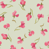 Floral seamless background from pink flowers Stock Images
