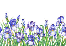 Floral seamless border with flowering violet and blue irises, on white background. Isolated watercolor hand drawn painting illustr Stock Photos