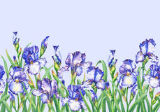 Floral seamless border with flowering violet  irises, on blue background. Isolated watercolor hand drawn painting illustr Stock Photo