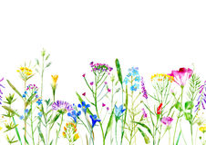Floral seamless border of a wild flowers and herbs on a white background. Buttercup, clover,bluebell,vetch,timothy grass,lobelia,spike. Watercolor hand drawn Stock Photos
