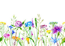 Floral seamless border of a wild flowers and herbs on a white background. Buttercup, clover,bluebell,vetch,timothy grass,lobelia,spike. Watercolor hand drawn stock illustration