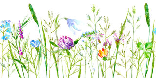 Floral seamless border of a wild flowers and herbs on a white background. Buttercup, clover,bluebell,vetch,timothy grass,lobelia,spike. Watercolor hand drawn Royalty Free Stock Image