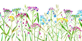 Floral seamless border of a wild flowers and herbs on a white background. Forget-me-not, vetch,timothy grass,spike. Watercolor hand drawn illustration royalty free illustration