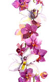 Floral seamless frame border with bright exotic flowers orchid. Aquarelle Stock Photo