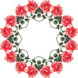 Floral seamless frame (roses) Stock Image