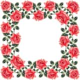 Floral seamless frame (roses) Stock Photos