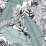 Floral seamless leaves pattern with tropical plants. Vector illustration royalty free illustration