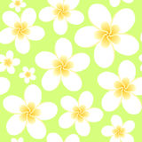 Floral seamless ornament Stock Images