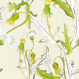 Floral seamless pattern. With dandelion flowers Royalty Free Stock Image