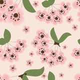 Floral seamless pattern. Cherry blossom - seamless floral pattern royalty free illustration
