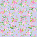 Floral seamless pattern with apple flowers and buds. Watercolor hand drawn illustration.Violet background stock illustration