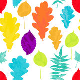 Floral seamless pattern with autumn grunge yellow, red, orange, green, blue, violet tree leaves on white background. Stock Image