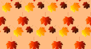 Floral  seamless pattern, autumn leaves seamless Royalty Free Stock Images