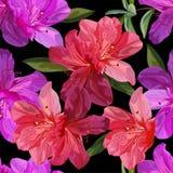 Floral seamless pattern with azalea vector illustration stock photo